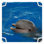 Lovable Dolphin Poster