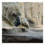 Playful Polar Bear Poster